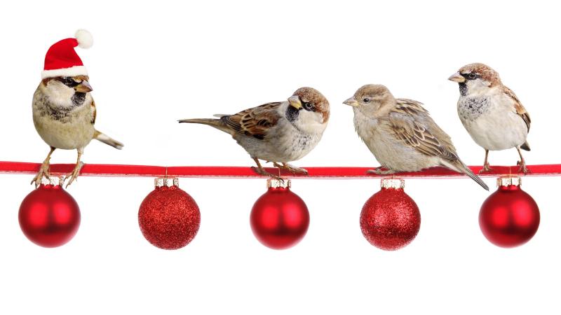 Sparrows-2900850_1920
