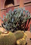 300_cactuspalermo0006
